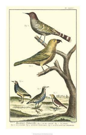 Bird Family II