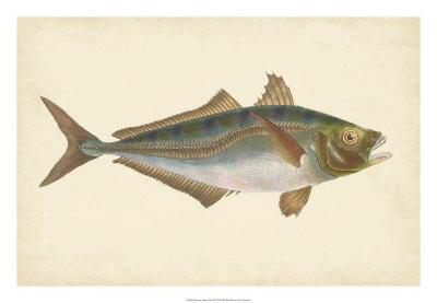 Donovan Antique Fish III