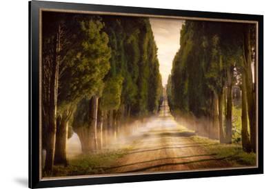 Cypress Lined Road II, Siena Tuscany