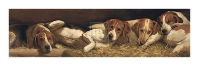 Foxhounds At Rest
