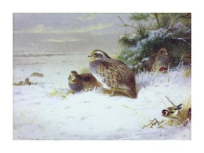 Partridges and Goldfinches in Winter