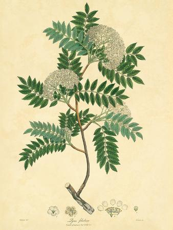 East Indian Plants VI