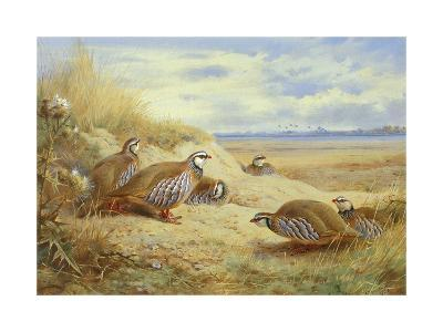 French Partridges