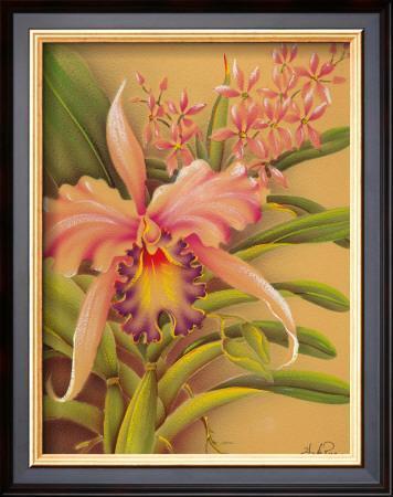 Pink Cattleya