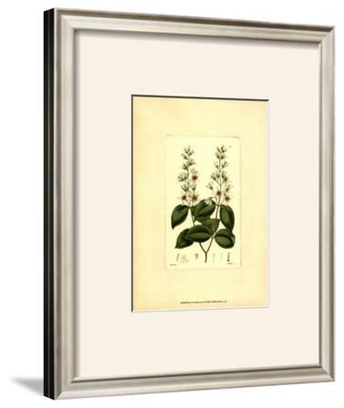 White Curtis Botanical II
