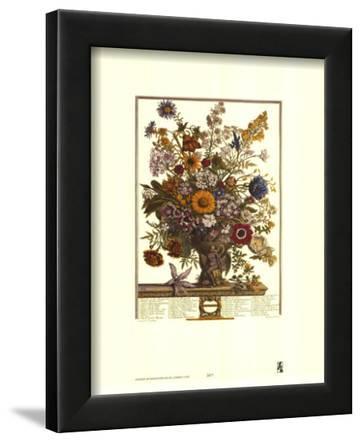 Twelve Months of Flowers, 1730, November