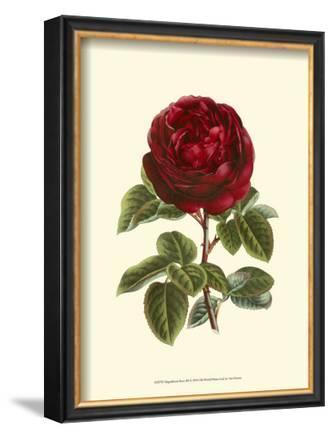 Magnificent Rose III