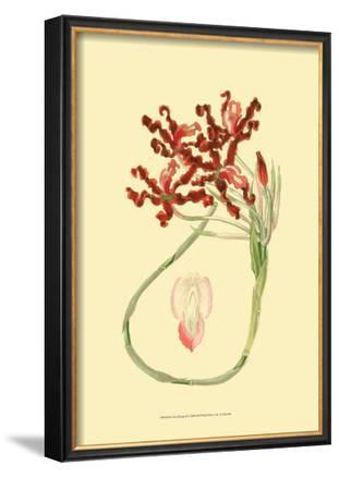 Le Fleur Rouge II