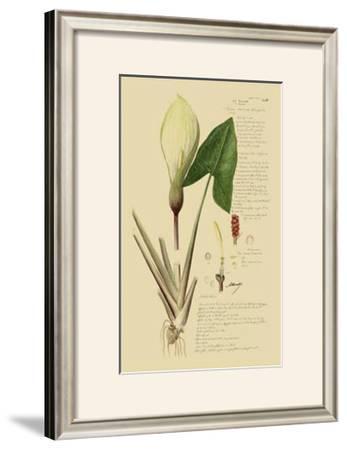 Aroid Plant III