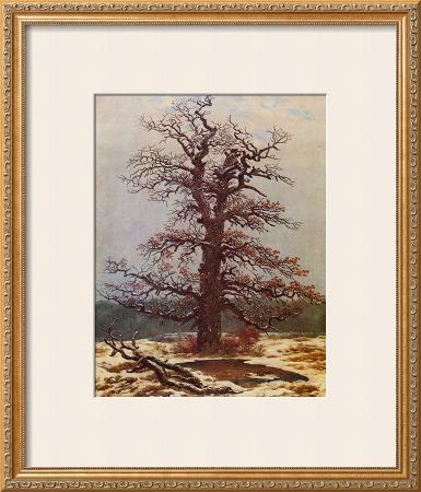 Oak in the Snow