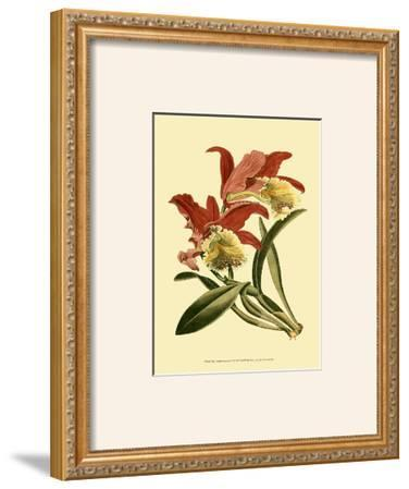 Orchid Splendor IV