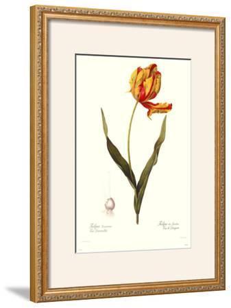 Tulipa Gesneria