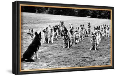 Police Dogs on Parade
