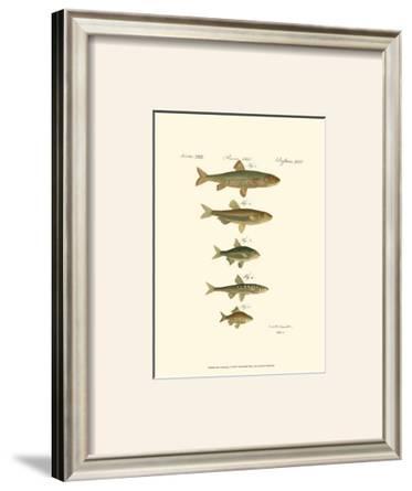Fish Anthology I