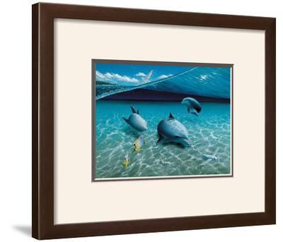 The Chase, Maui Dolphins