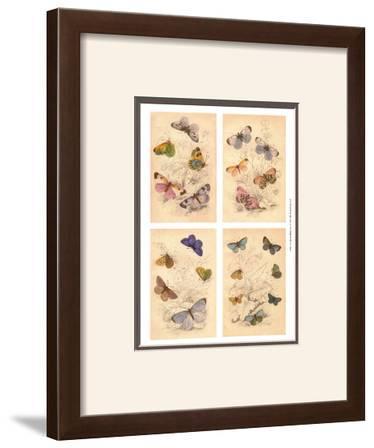 Jardini Butterflies