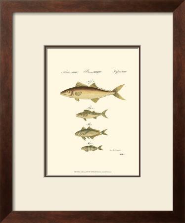 Fish Anthology II