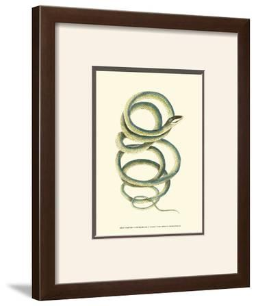 Vibrant Snake II