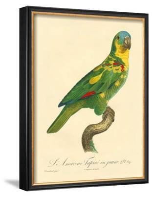 Barraband Parrot No. 89