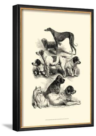 International Show Dogs II, c.1863