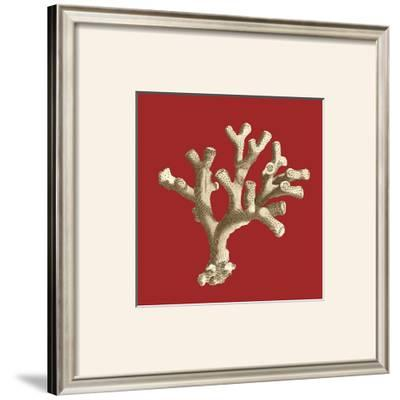 Coral on Red II