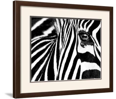 AFRICAN WILDLIFE ART PRINT Zebras Rocco Sette