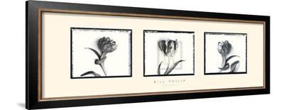 Three Tulips II