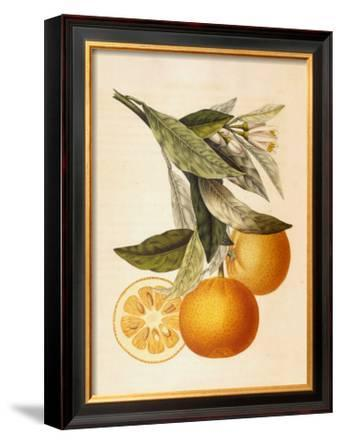 Tuscany Citrus II