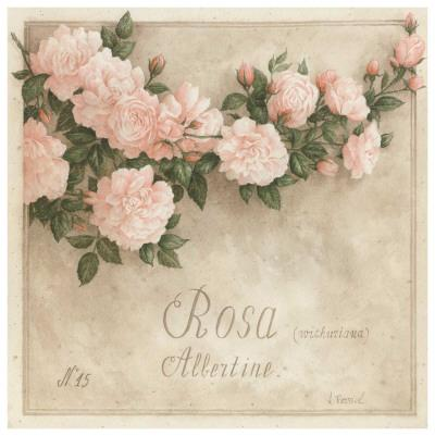 Rosa, Albertine