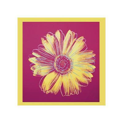 Daisy, c.1982 (Fuchsia and Yellow)
