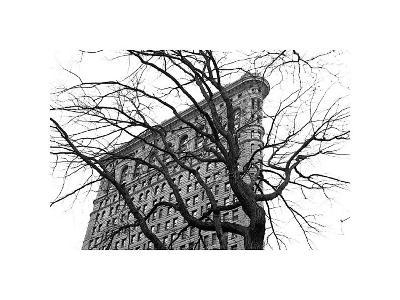 Flatiron with Tree