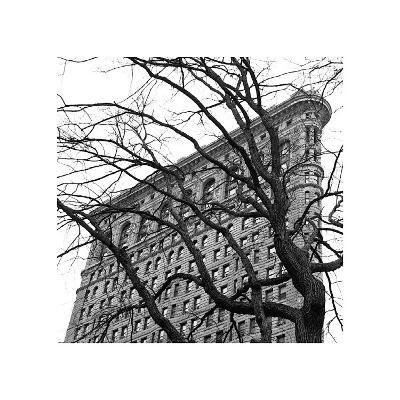 Flatiron with Tree (detail)