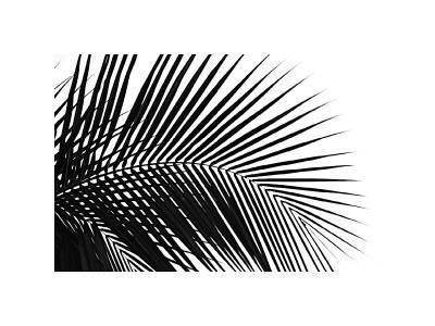 Palms, no. 10