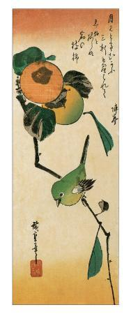 A Japanese White-Eye on a Persimmon Branch