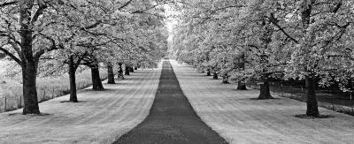 Maple Lined Road