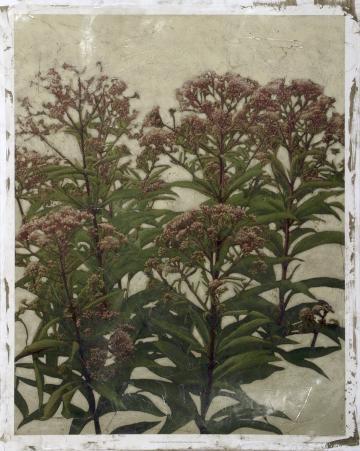 Mauve Blooms II