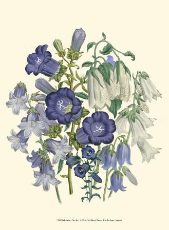 Loudon Florals I