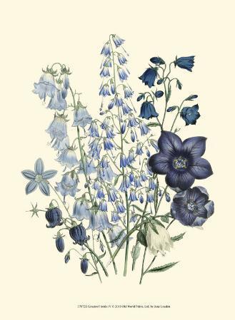 Loudon Florals IV