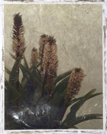 Pineapple Plant III
