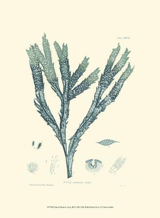 Nature Print in Aqua III