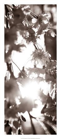 Blossom Triptych I
