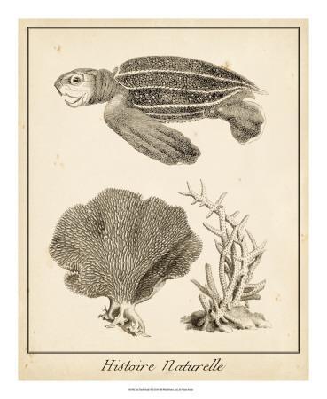 Sea Turtle Study II