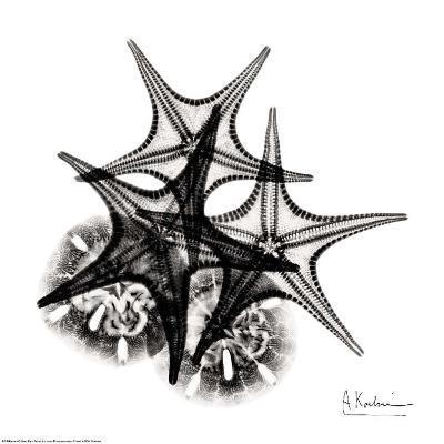 X-ray Starfish and Sanddollar