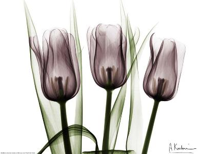 Trio of Tulips I