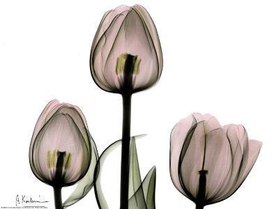 Trio of Tulips II