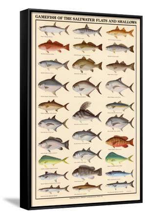 Game Fish of the Saltwater Flats and Shallows