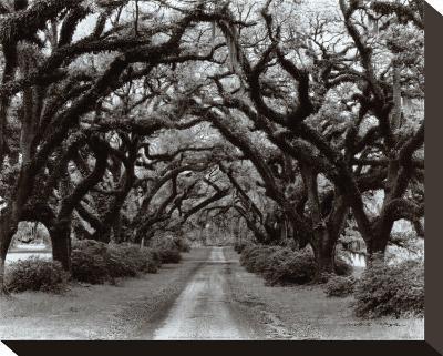 Path in the Oaks II, Louisiana