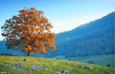 Tree Hill Seasons - 3D Poster