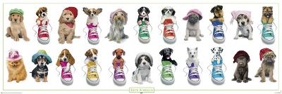 Keith Kimberlin - dogs with hats and sneakers
