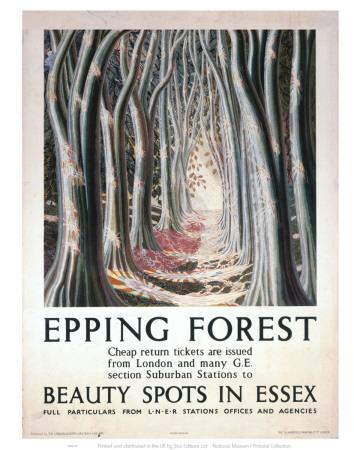 Epping Forest Beauty Spots in Essex